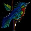tina_bird